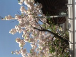 image/2013-04-20T11:56:27-1.JPG